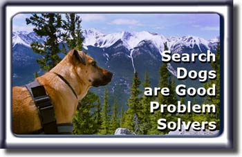 Ebbey the Search Dog: Good problem solver.
