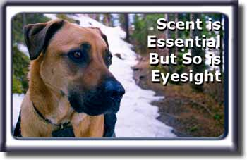 Eyesight is also Essential for Ebbey the Search Dog.